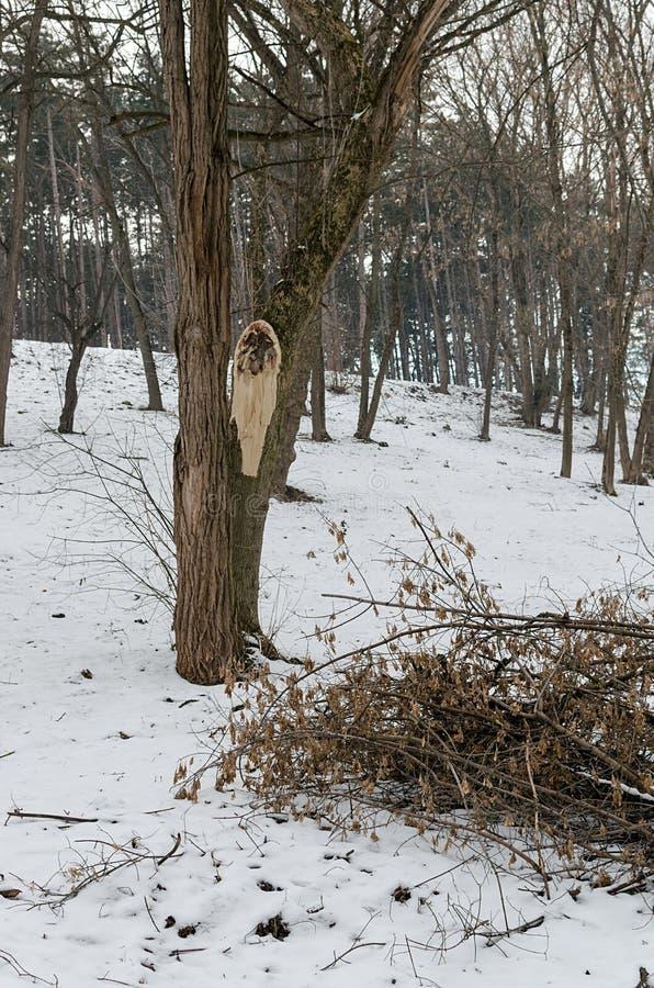 Deforestation and demolished tree, timber stock photo