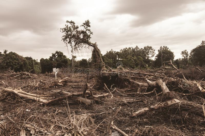 Deforestation environmental damage - tropical rain forest destroyed to construction.  stock photography