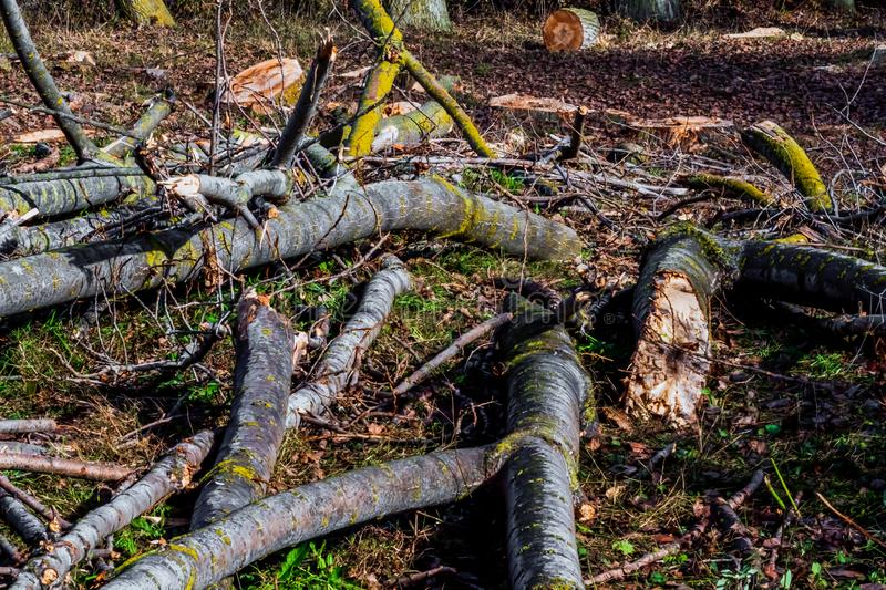 Deforestation of the forest causing environmental pollution stock images