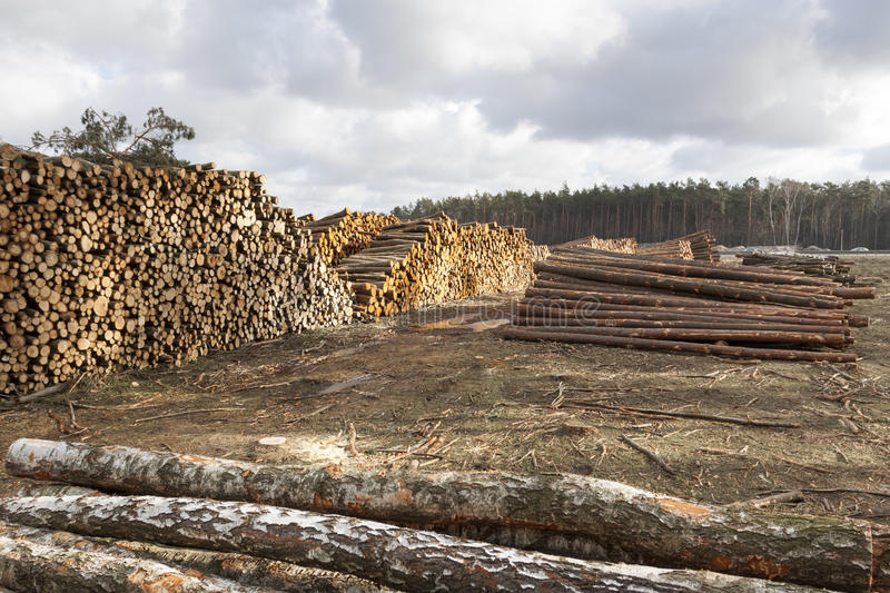 Deforestation. Forestry and timber harvesting in Poland royalty free stock photo