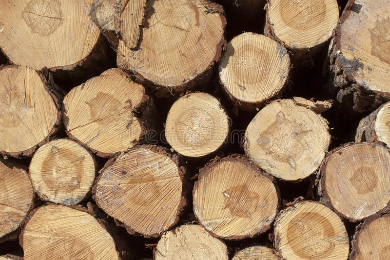 Deforestation. Forestry and timber harvesting in Poland royalty free stock photography