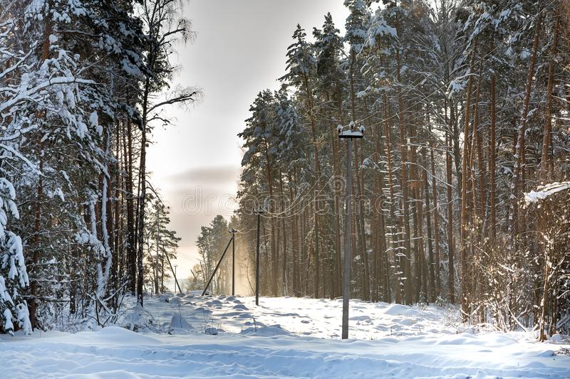 Deforestation, junction of power lines. glade for power line. Winter forest after snowfall. Snow falling from trees and power. Poles royalty free stock photo