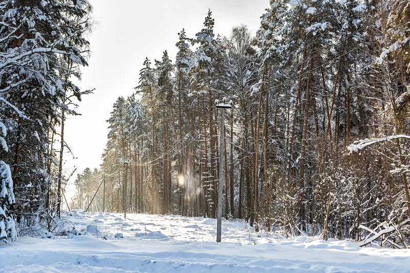 Deforestation, junction of power lines. glade for power line. Winter forest after snowfall. Snow falling from trees and power. Poles stock images