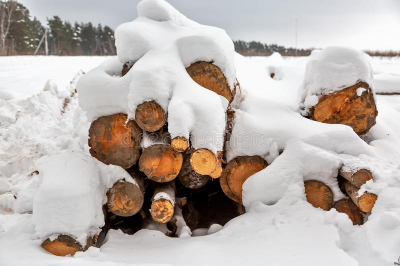 Deforestation. Lumber harvesting. Logs under snow. Stock of wood in forest. Winter snowdrifts.  royalty free stock photography