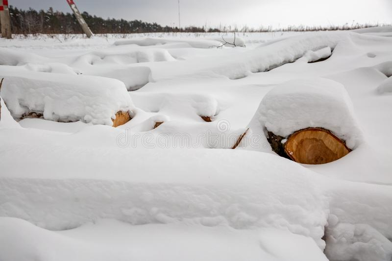 Deforestation. Lumber harvesting. Logs under snow. Stock of wood in forest. Winter snowdrifts.  stock image