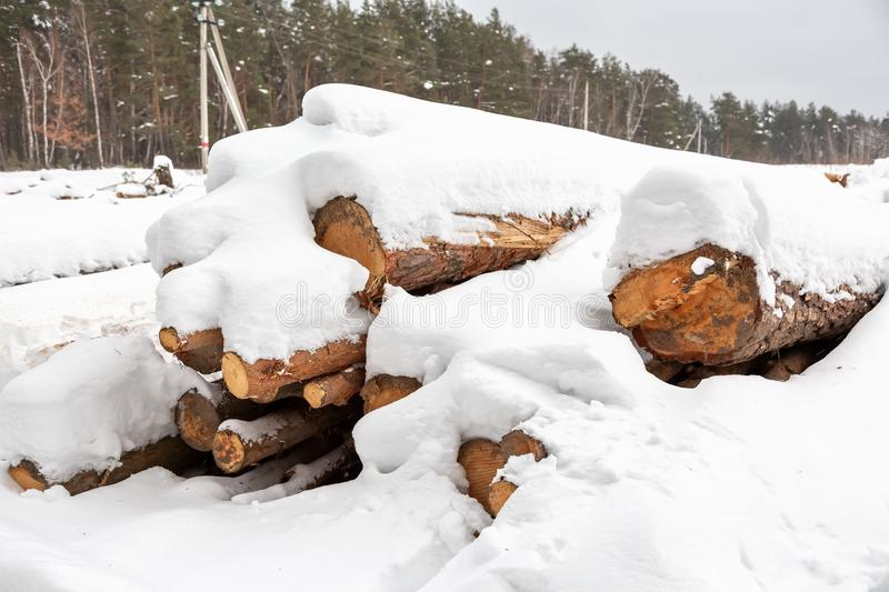Deforestation. Lumber harvesting. Logs under snow. Stock of wood in forest. Winter snowdrifts.  royalty free stock images