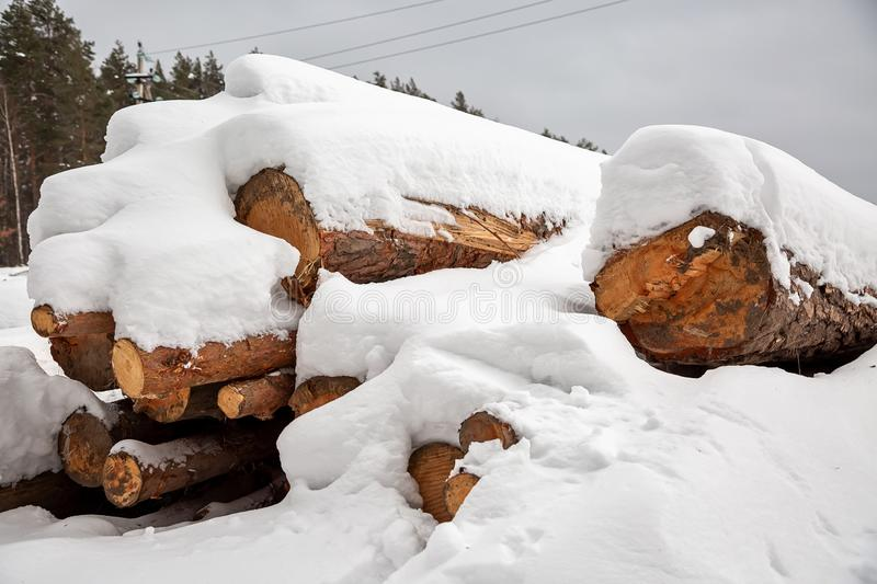 Deforestation. Lumber harvesting. Logs under snow. Stock of wood in forest. Winter snowdrifts.  royalty free stock photos