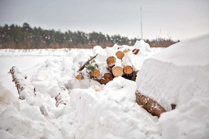 Deforestation. Lumber harvesting. Logs under snow. Stock of wood in forest. Winter snowdrifts.  stock photos