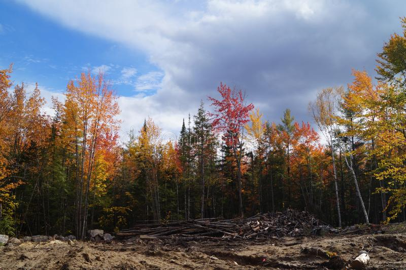 Deforestation Old Wilderness Maine forest in fall with cut logs. Cleared land in a Maine woods in autumn under a cloudy blue sky with red, yellow and green stock photos