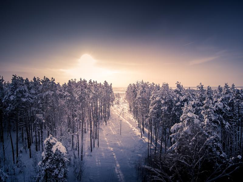 Toned. Deforestation for power lines. Aerial view. Winter forest. Tree in snow. Sunny day. Deforestation for power lines. Aerial view from drone. Winter forest royalty free stock image