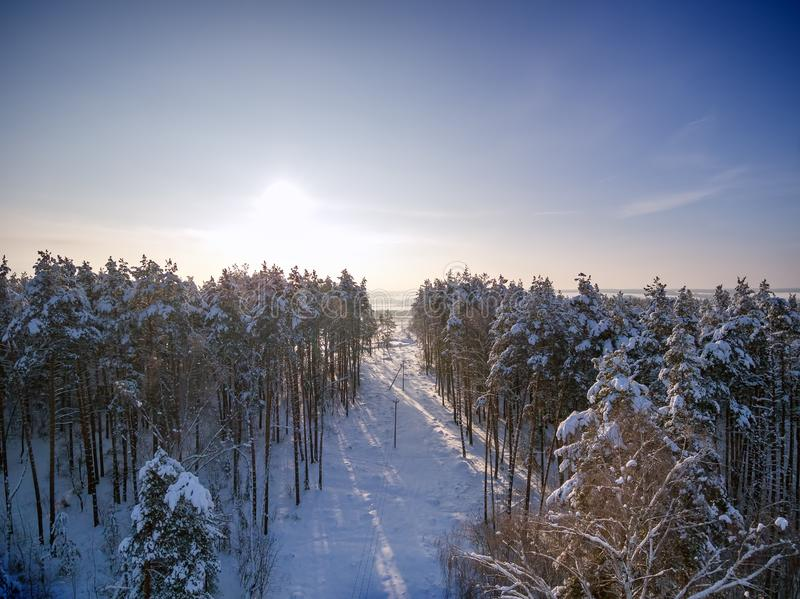 Deforestation for power lines. Aerial view. Winter forest. Tree in snow. Sunny day.  royalty free stock photo