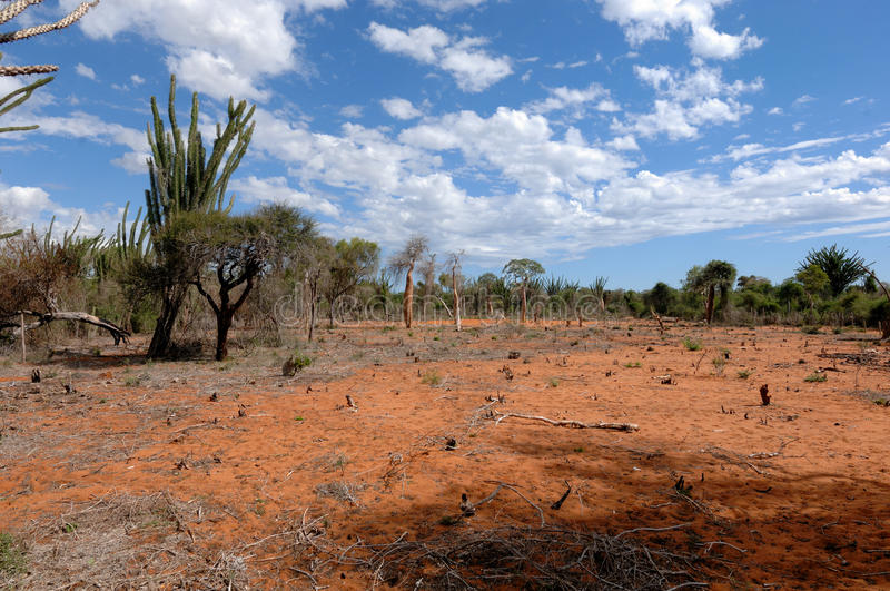 Deforestation on South of Madagascar royalty free stock images