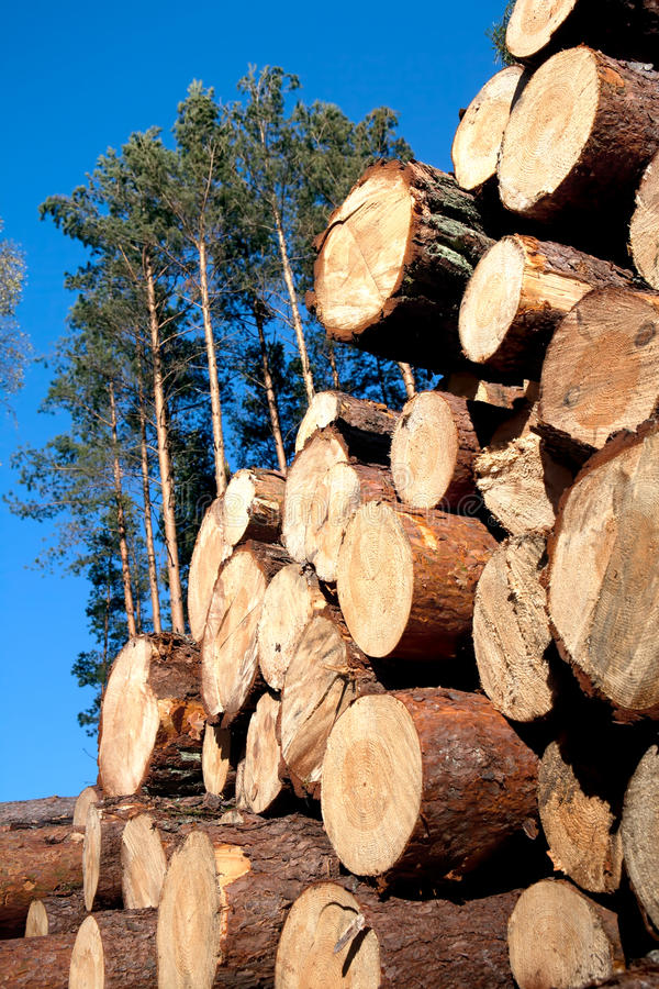Download Deforestation After The Squall Stock Photo - Image: 23412072