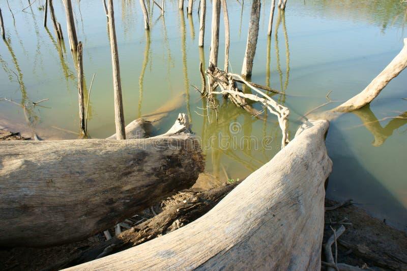Deforestation, stump, change climate, living environment stock photos