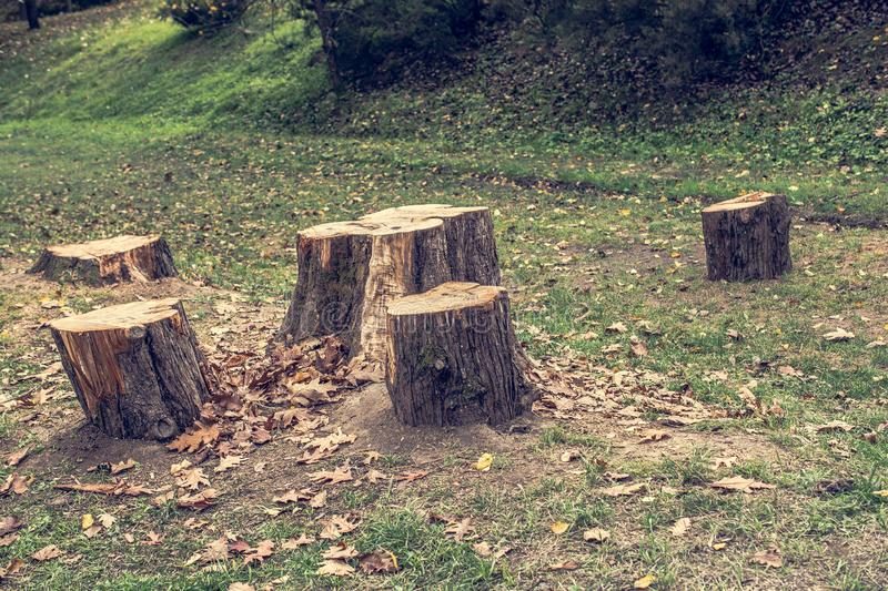 Deforestation. Stump of tree after cutting forest. Deforestation with Stump of tree after cutting forest stock photo
