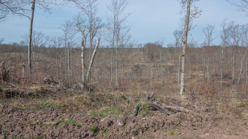 Deforested loggade område på DNR-land i nordliga Wisconsin i regulatorn Knowles State Park royaltyfria foton