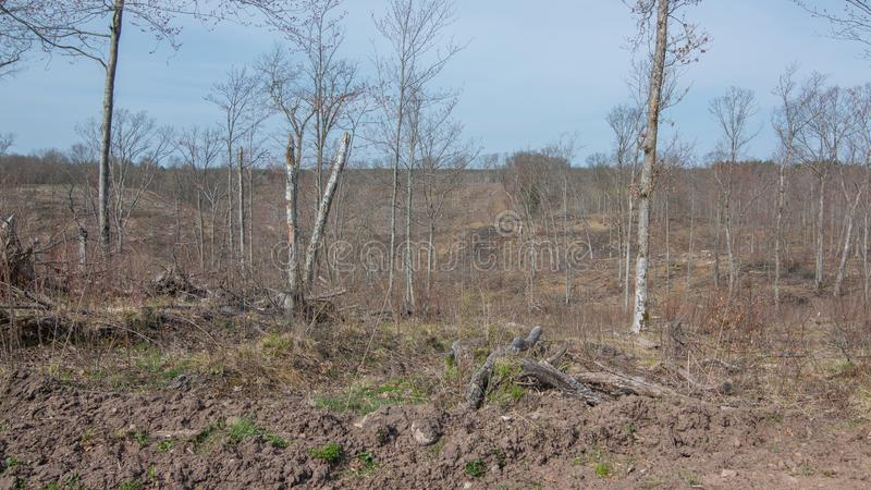 Deforested logged area on DNR land in Northern Wisconsin in Governor Knowles State Park.  royalty free stock photos