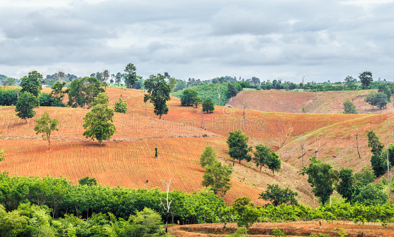 Deforestedland met regenachtige wolk stock fotografie