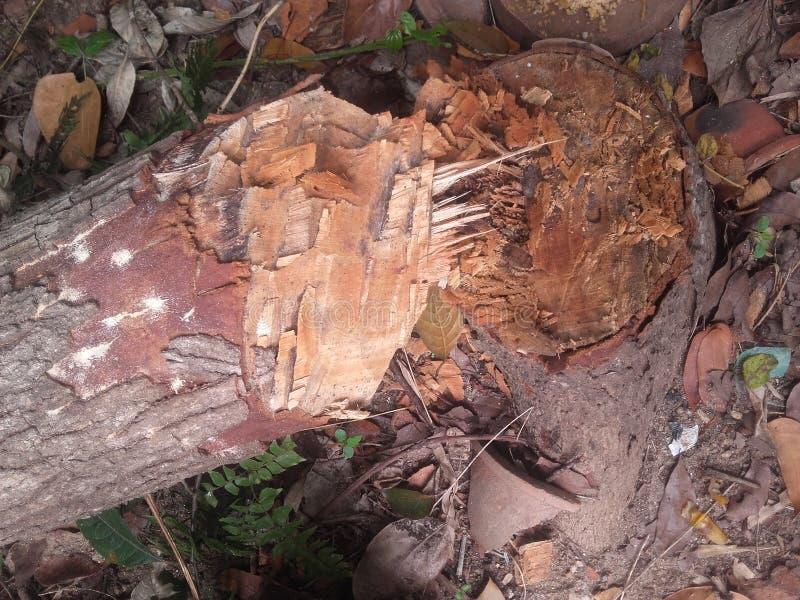 Deforestraion imagen de archivo libre de regalías