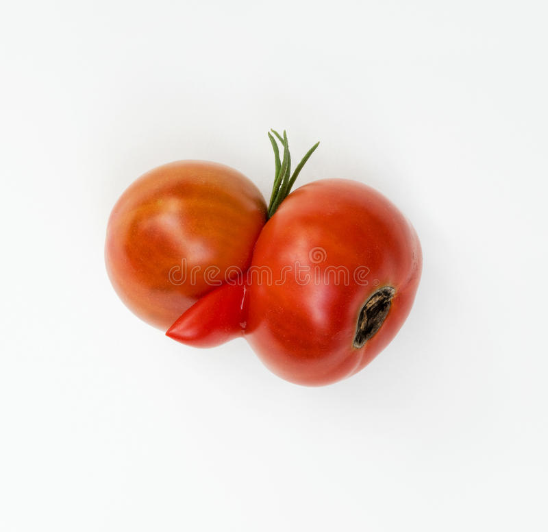 Deformed Tomatoes. Two red tomatoes grown together with third appendage stock photography