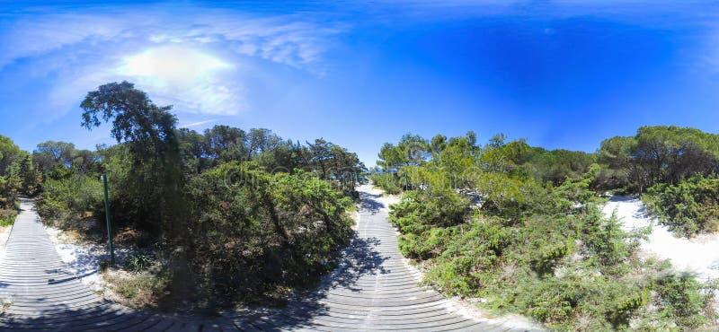 360 degrés regardent d'une promenade en bois dans le bois du pin images stock