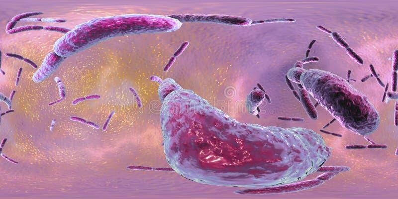 360-degree bańczasta panorama bakterii Lactobacillus royalty ilustracja