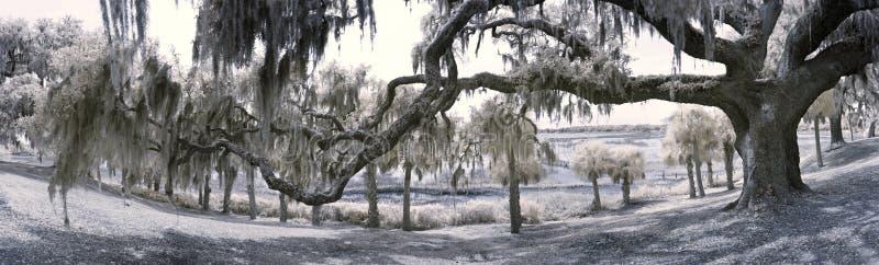 180 degree panorama of live oak and coast royalty free stock photos