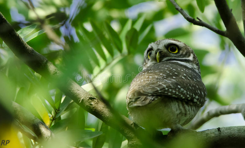 A 360 degree look by an owl stock images