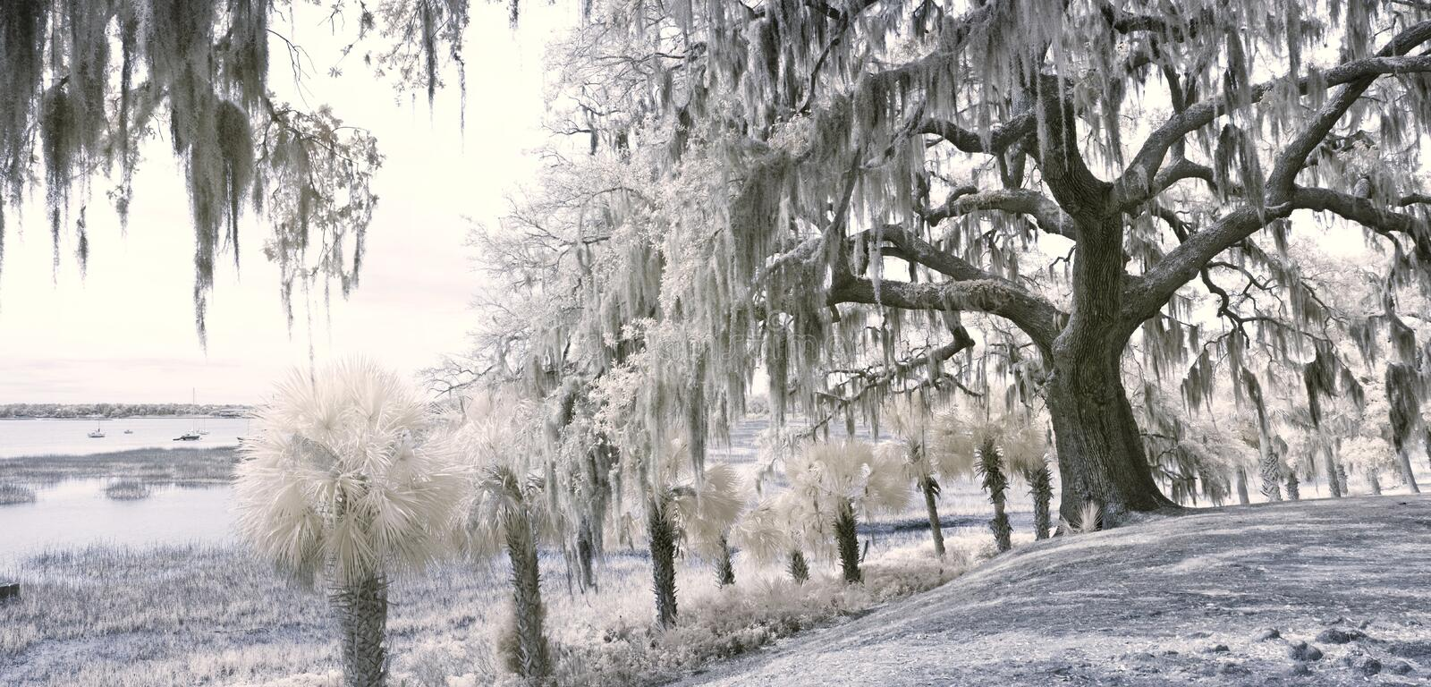 90 degree infrared panorama royalty free stock photography