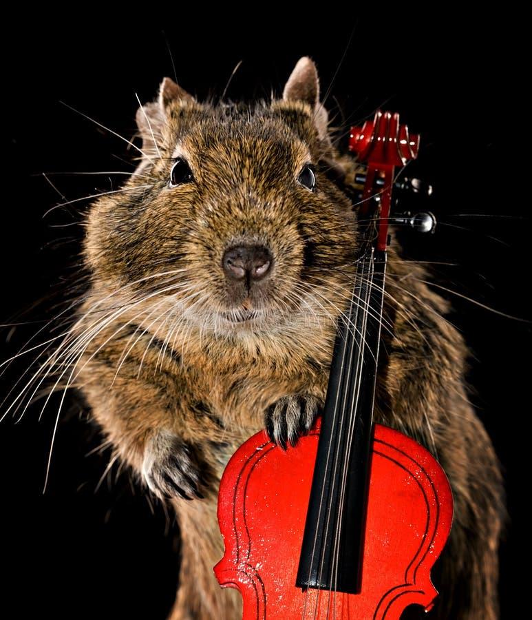 Download Degu musical image stock. Image du violon, alto, écureuil - 45360713