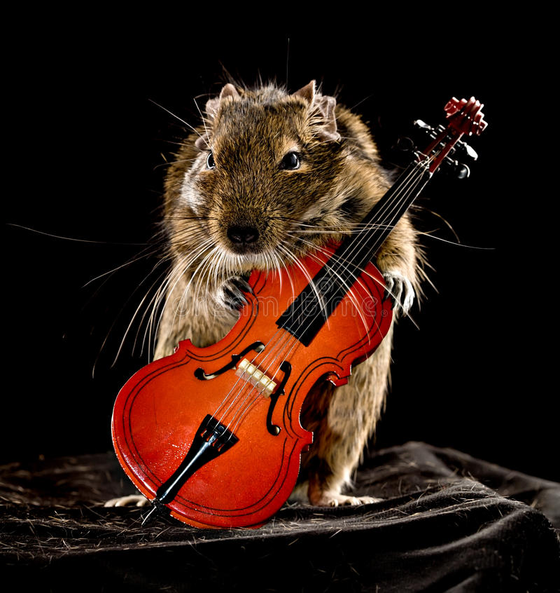 Download Degu musical image stock. Image du museau, petit, violon - 45360731