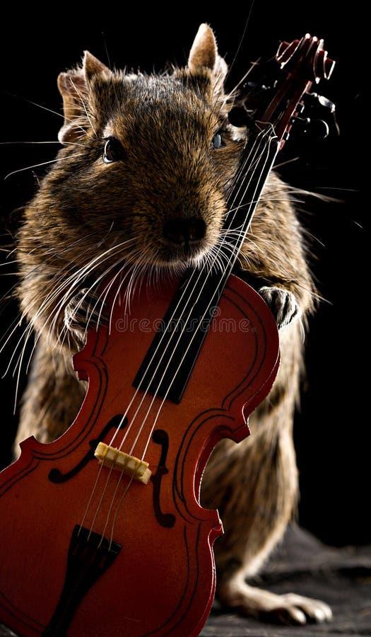 Deguhamster die zich met cello bevinden stock foto