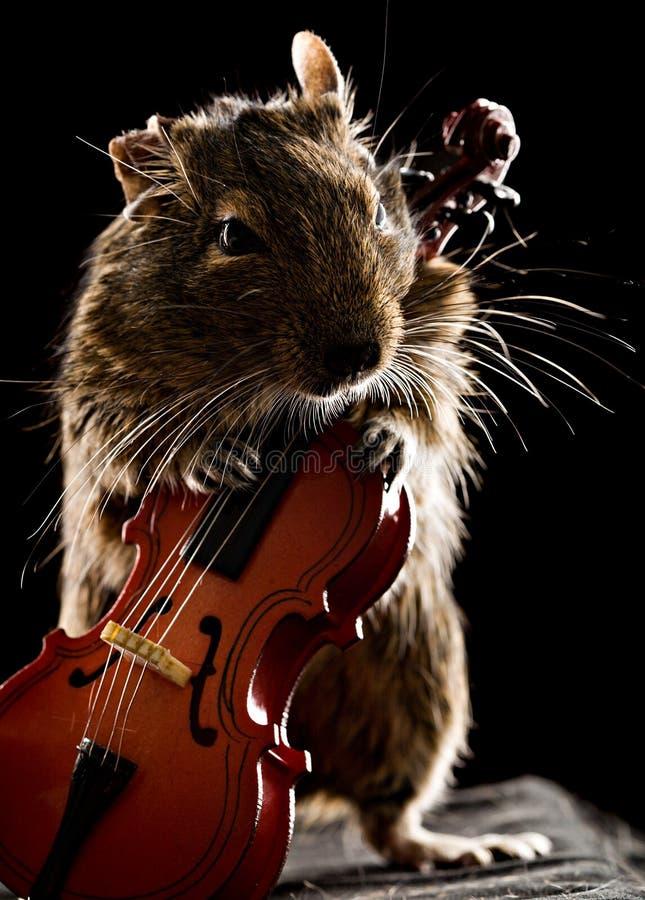 Degumuis het spelen cello royalty-vrije stock afbeelding