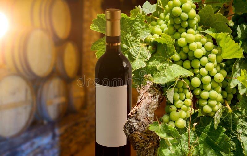 Degustação de vinhos em uma adega de vinho velha com os tambores de vinho de madeira em uma adega, em uma garrafa de vinho tinto  fotos de stock