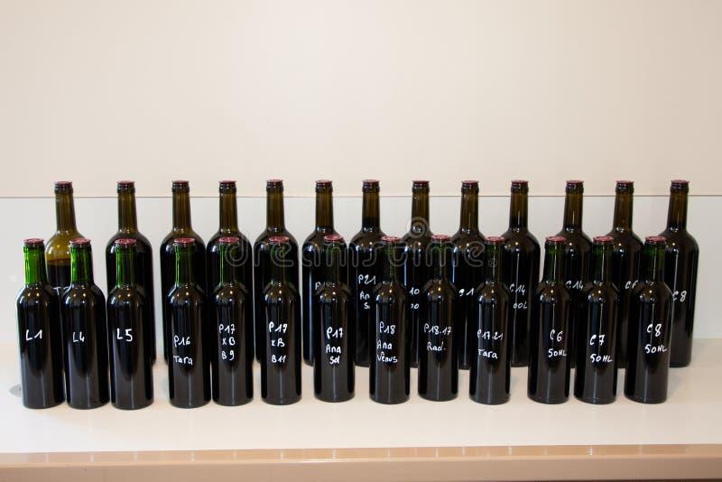 Degustación de vinos y observación de Burdeos rojo en el sótano imagen de archivo libre de regalías