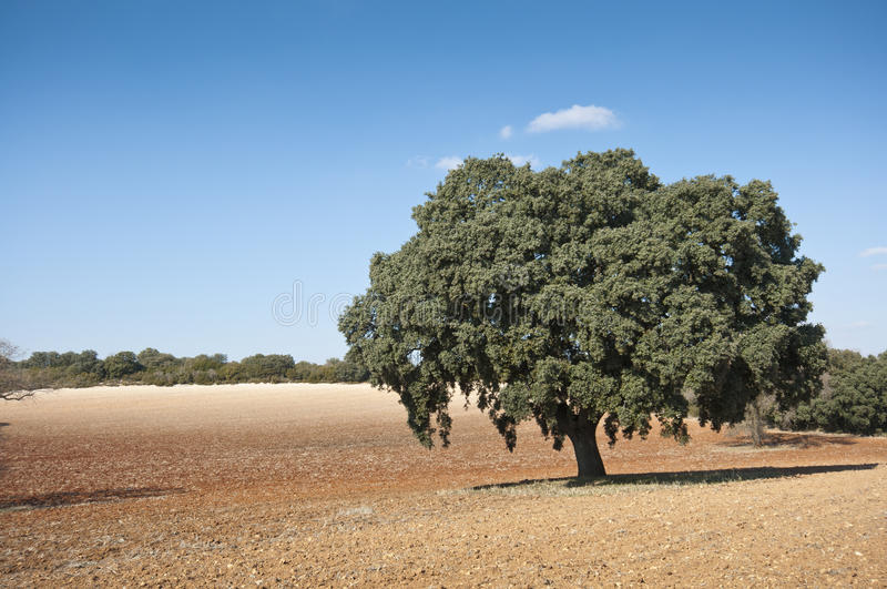 Download Dehesa In An Agricultural Landscape Stock Photo - Image: 25616892
