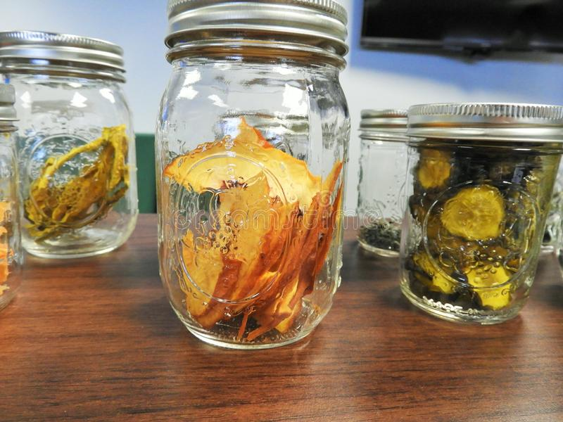 Dehydrated Apples And Zucchini Free Public Domain Cc0 Image