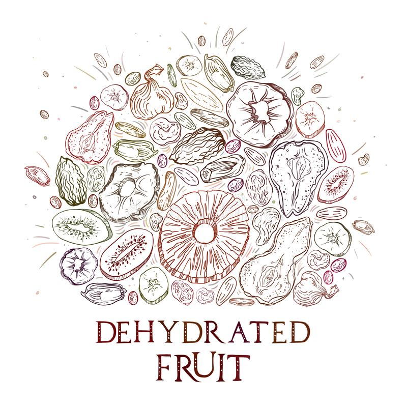 Dehydrated fruit pattern. Dehydrated fruit round shape pattern in engraved style with colored elements and lettering. Fully editable color vector illustrations royalty free illustration