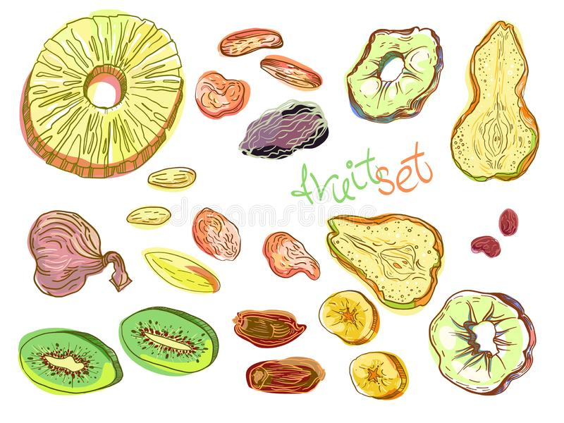 Dehydrated fruit set. In engraved style with lettering. Fully editable color vector illustrations royalty free illustration