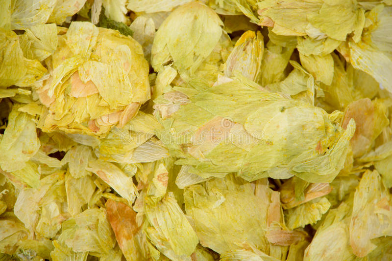 Download Dehydrated Hops stock image. Image of bitter, homebrewing - 35126335