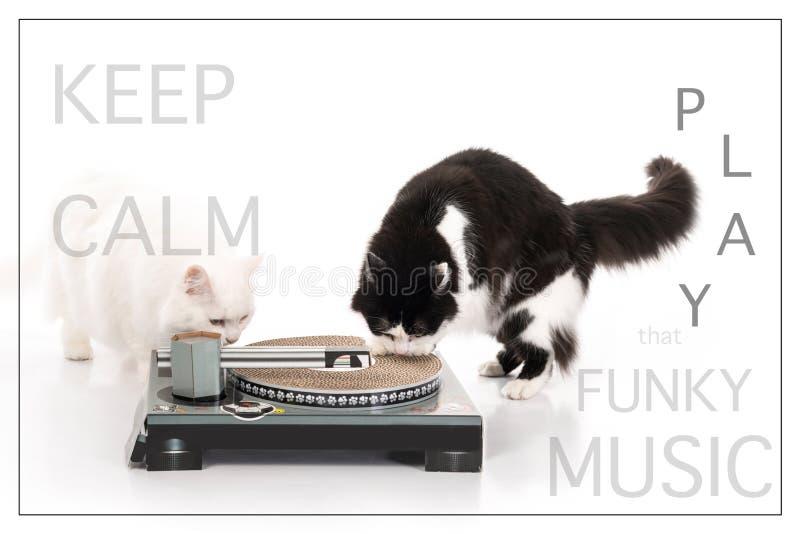 Dei miei gatti di angora dei tacchini che giocano musica immagine stock libera da diritti