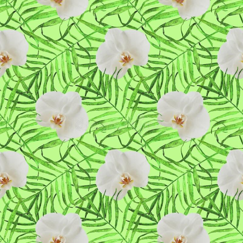 Deixa palmeiras com o verde sem emenda do teste padrão da orquídea ilustração stock