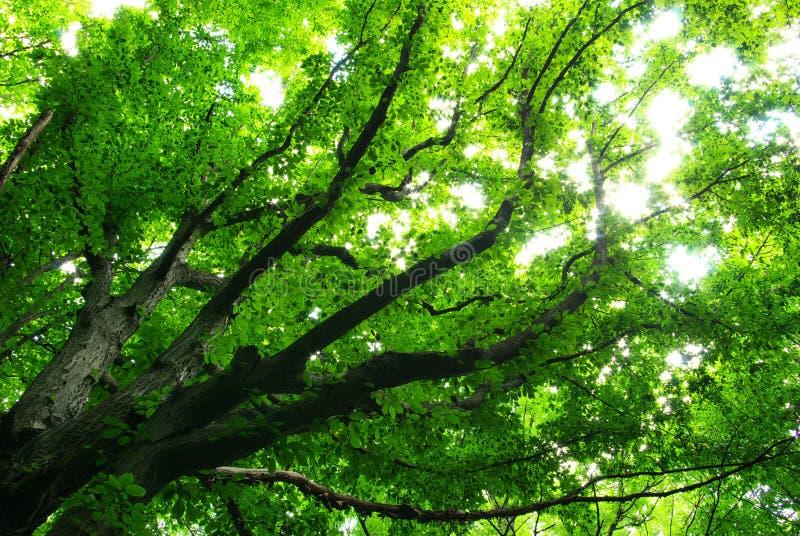 Download Deja el fondo foto de archivo. Imagen de árbol, plantas - 7284278