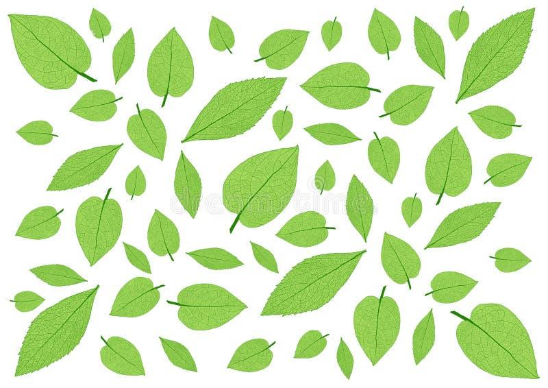Deja el modelo verde en el fondo blanco imagen de archivo libre de regalías