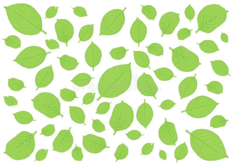 Deja el modelo verde en el fondo blanco imagen de archivo