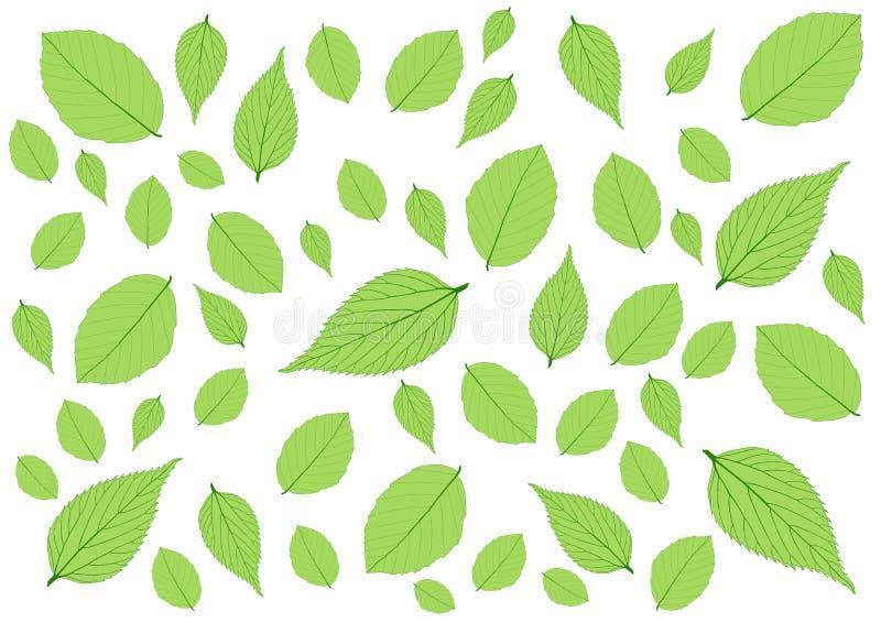 Deja el modelo verde en el fondo blanco ilustración del vector
