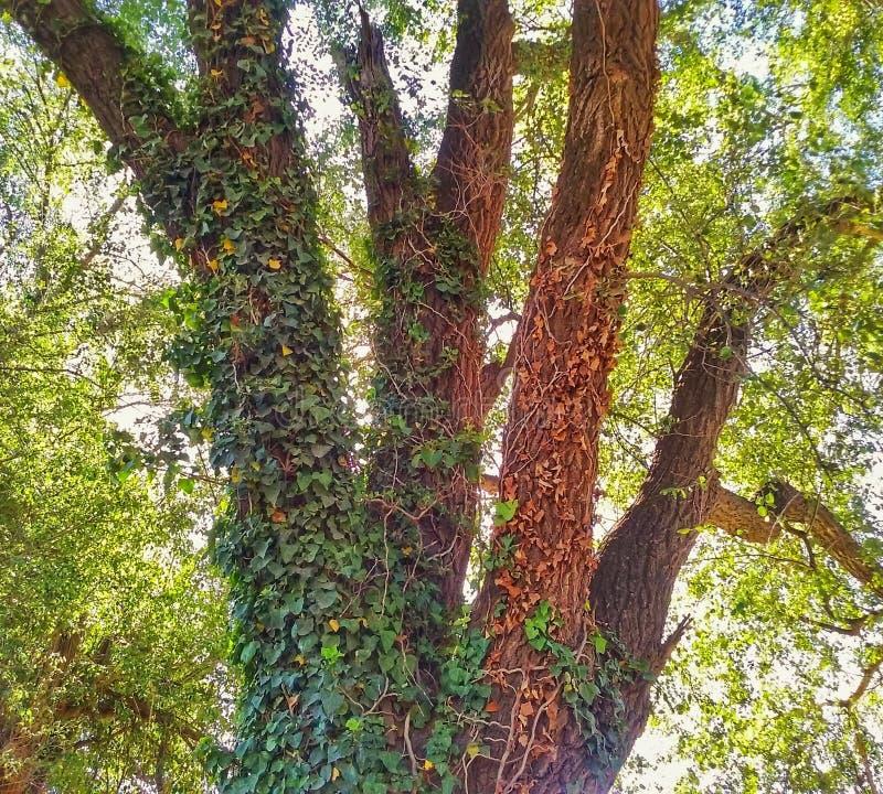 Deje el árbol fotos de archivo