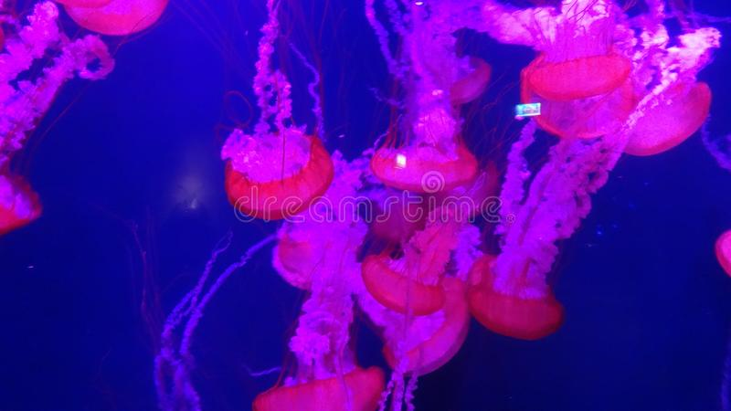 Deje a Jelly Fish Tell toda fotos de archivo