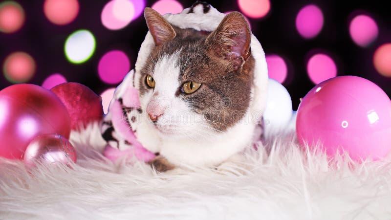 Dekor för djura för xmas för julkatt gullig rosa katter för djur arkivfoton