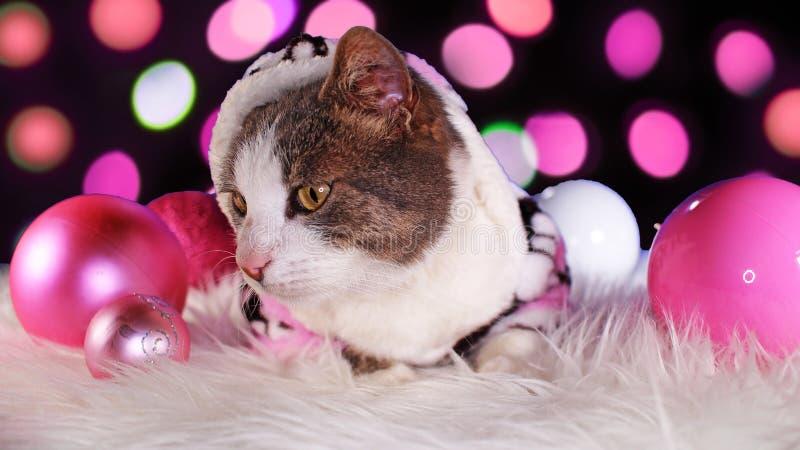 Dekor för djura för xmas för julkatt gullig rosa katter för djur royaltyfria bilder